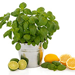 Cool Citrus Basil* (KY) Fragrance Oil 15345