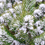 Frosty Pines Fragrance Oil 15549