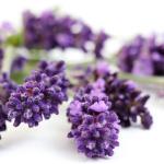 Lavender Vanilla Flavor Oil 15497