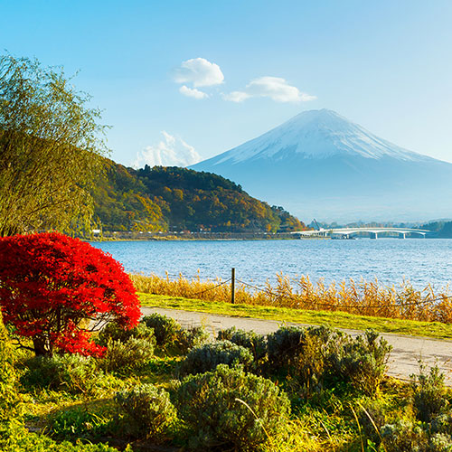 Mount Fuji Fragrance Oil 15854