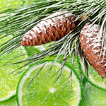 Pinecone & Lime* Fragrance Oil 15975
