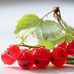 Red Currant Fragrance Oil 16038